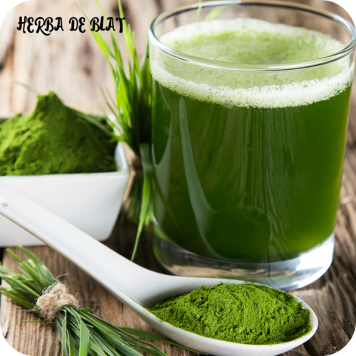 Essential Eco Wheatgrass